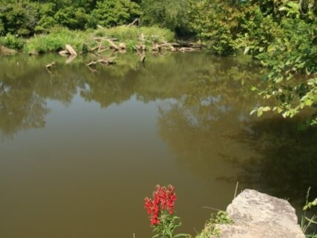 photo of red flowers and rock in foreground looking over still river water with logs and trees in the background