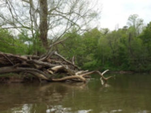 a photo take on the river from a kayak of a log jumble on a small island in the river with trees in the background