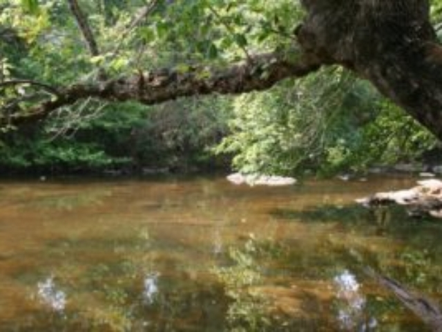 photo of shallow river water with a tree overhanging from the upper right corner