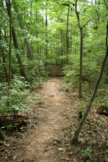 photo of natural surface trail in the woods with trees on either side