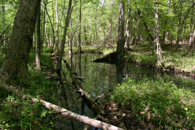 photo of a vernal pool with trees and vegetation along the banks and a fallen log in the foreground